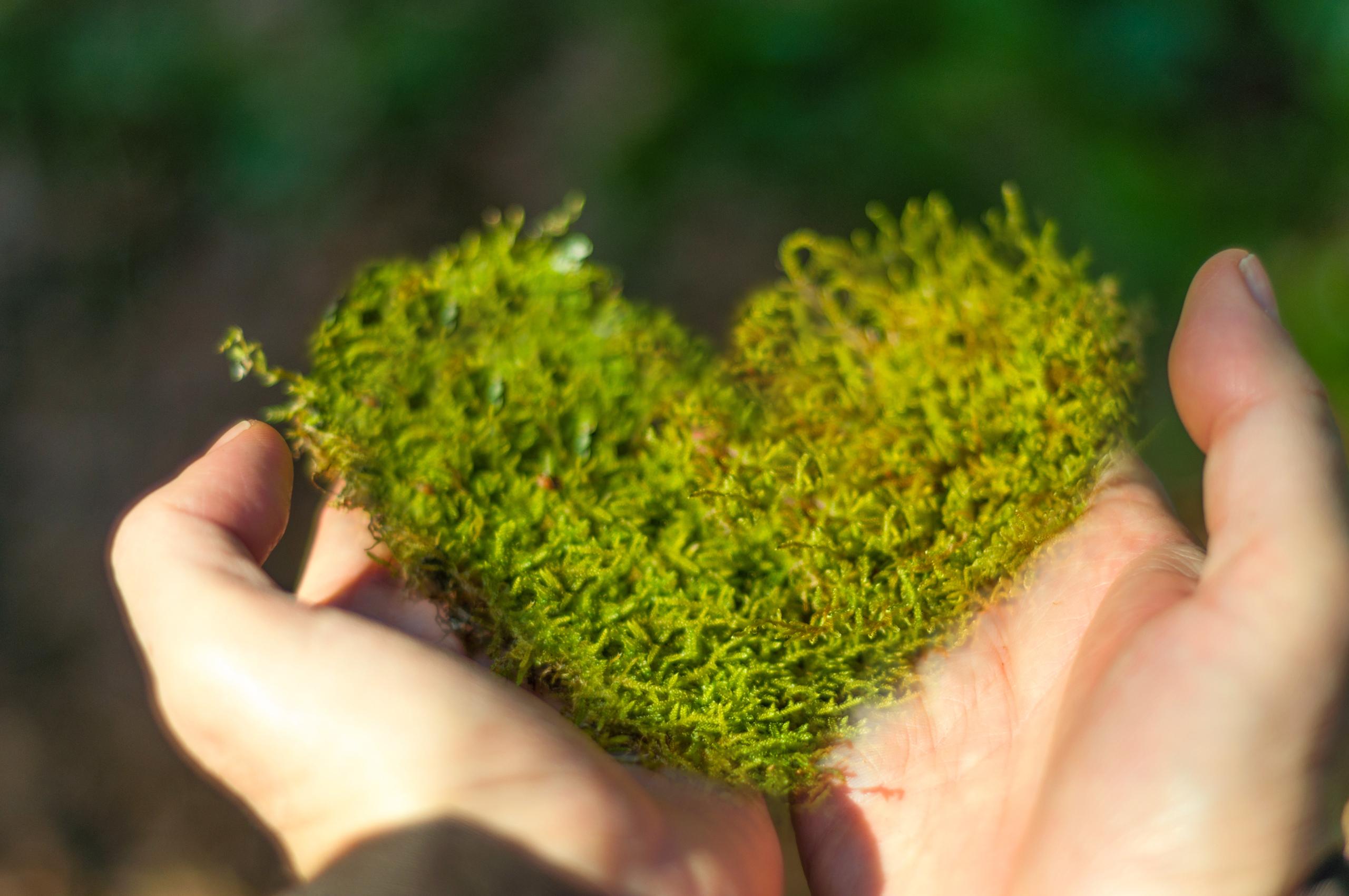 Miljön